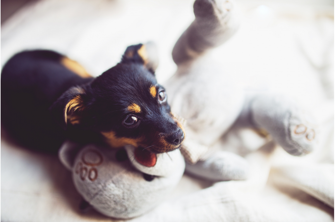 What You Need To Know About Pets in Rental Properties